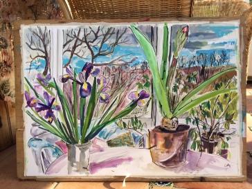 Amaryllis, Iris plants