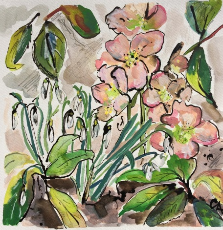 CA061 Clare Arbuthnott, Hellebores and snowdrops