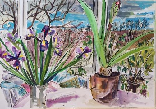 CA062 Clare Arbuthnott, Amarylis and Irises